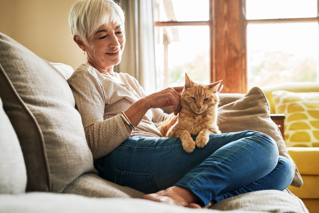 We're a Cat Friendly Practice®! What It Means for You and Your Cats